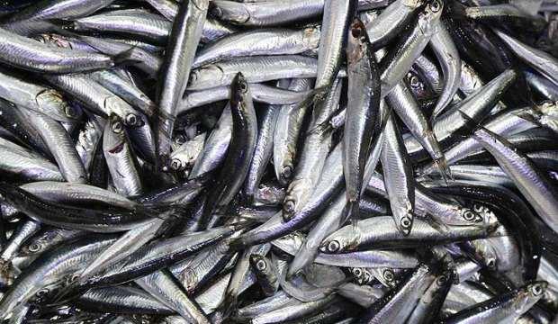 Hamsi avının kısmen durdurulması balığın fiyatını artırdı
